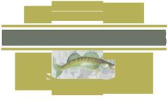 Pisciculture Gîte de Pêche les étangs creusois
